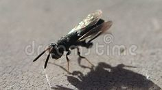 Video about A little black insect cleaning its body. Video of little, antennas, arthropod - 102643257 Cleaning, Insects, Home Cleaning