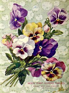 Pansies bouquet. Vick's Garden & Floral Guide (1903) | by Swallowtail Garden Seeds