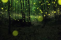 The world's first ever Firefly-themed park just opened it's doors for visitors. where else than in China, Wuhan to be … Nagoya, In China, Wuhan, Bild Gold, Long Exposure Photos, Light Trails, Forest Fairy, Magical Forest, Midsummer Nights Dream