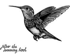 Humming bird tatuajes hummingbird tattoo, bird drawings y bo Bird Tattoo Neck, Bird Tattoo Ribs, Tiny Bird Tattoos, Bird Tattoo Meaning, Flower Tattoos, Freedom Bird Tattoos, Love Birds Painting, Bird Sketch, Bird Drawings