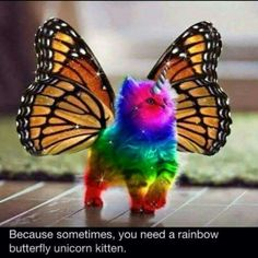 Because sometimes, you need a rainbow unicorn butterfly kitten.