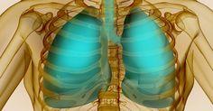 Top 10 bylín pre optimálnu liečbu pľúc: Liečia infekcie a regenerujú sliznice | Božské nápady