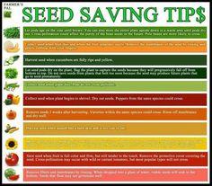 Seed Saving
