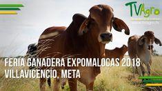 Feria Ganadera Expomalocas 2018 Villavicencio, Meta - TvAgro por Juan Go...