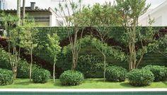 Verde Jardim: Construindo um muro verde