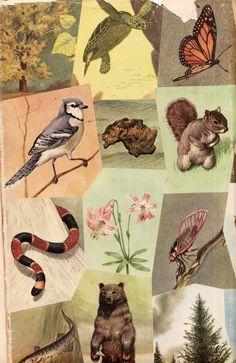 nature encyclopaedia
