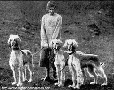 Afghan Hound Times - Jean Manson/Bell Murray /Cove Afghans Photo