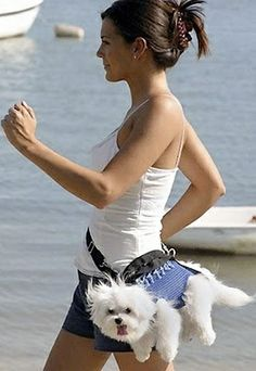 puppy fanny pack..... hmm. 2 dogs who were supposed to be light weight. not sure if this would work
