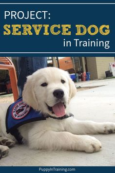 PROJECT: Service Dog in Training. It's simple we're putting together a guide… PROJECT: Service Dog in Training. It's simple we're Puppy Training Guide, Service Dog Training, Basic Dog Training, Service Dogs, Training Schedule, Training Dogs, Training School, Training Classes, Brain Training