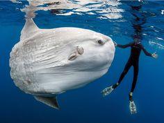 Луна-рыба. Автор фото: Daniel Botelho.