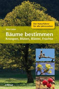 Lüder, Rita «Bäume bestimmen - Knospen, Blüten, Blätter, Früchte. Der Naturführer für alle Jahreszeiten» | 978-3-258-07775-8 | www.haupt.ch