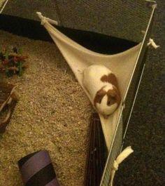 DIY Guinea Pig Corner Hammock - petdiys.com