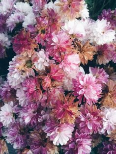 See more of chalyy's content on VSCO. My Flower, Beautiful Flowers, Plants Are Friends, Zinnias, Flower Boxes, Belle Photo, Flourish, Orchids, Flower Arrangements