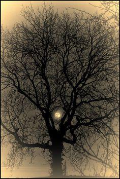 Moon & Tree