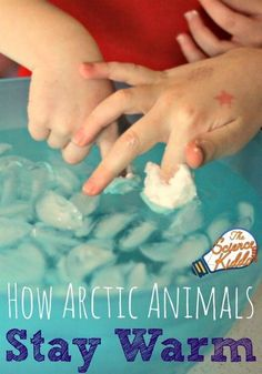 Awesome science activity for winter. How arctic animals stay warm! Perfect for a winter unit or arctic theme.