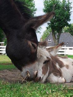 Mama & Baby! Adorable!