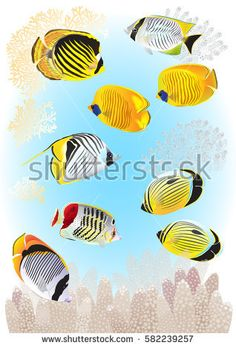 A collection of butterfly coral fishes, tender sprigs of corals are included. Vector illustration.