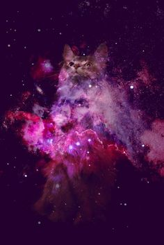 Space Print + Cat = Perfection