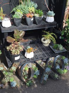 Fun Garden Ideas Found At Orchard Supply Hardware.
