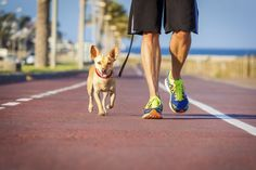 5 razões para você passear diariamente com o seu cachorro