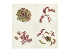 Succulent Wall Art Prints Set of 4  Fine Art by LucidMood on Etsy, $24.00