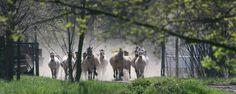 Mlodzikowo.pl - agroturystyka, stadnina koni | Wielkopolska