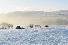 size: Photographic Print: Ireland, Co.Donegal, Milford, snow covered landscape by Shaun Egan : Donegal, Find Art, Framed Artwork, Ireland, Snow, Landscape, Cover, Outdoor, Autumn