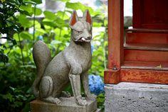 Kitsune (狐?, IPA: [kitsɯne] ( listen)) is the Japanese word for fox.