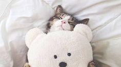 4 techniques pour masser votre chat
