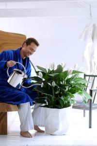 Faire refleurir le spathiphyllum (Fiches conseils)