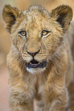Big cub portrait