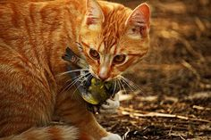 Have you ever wondered if your cat loves you? Cats express love for their owners in a number of ways. While some of these may be a bit obvious, other tokens of their affection have some hidden meaning behind them …