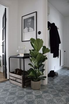 plant for an entry way Interior, Hallway Inspiration, Interior Inspiration, Home Decor, House Interior, Apartment Decor, Home Deco, Home Interior Design, Interior Design