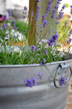bucket of lavender...