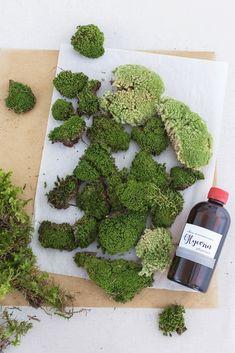 DIY moss pictures and how you can easily preserve forest moss yourself. - My CMS Moss Wall Art, Moss Art, Plant Projects, Diy Craft Projects, Dish Garden, Garden Art, Island Moos, Vertical Garden Plants, Garden Wall Designs