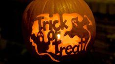 Universal Wellness: Enlightened Trick or Treat Harry Potter Pumpkin, Owl Pumpkin, Amazing Pumpkin Carving, 31 Days Of Halloween, Trick Or Treat, Wellness, Cleaning, Clothes, Decor