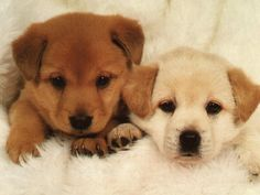 Cute Puppies! | cute puppy pictures puppies pictures puppies pictures cute cute ...