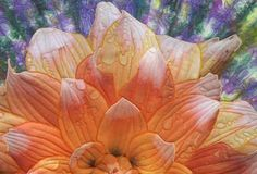 Shibori Art Quilt with Seattle Dahlia suggest the morning sunrise with dew on the flower by Barbara Barrick McKie