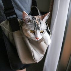 A kitty catching a ride