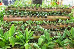 Ide Kreatif Menanam Sayuran dengan Media Batang Pisang