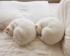 white cats | floatan: 毎日おなじようで、どこかちがう every day is a new day.