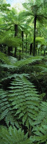 Westland National Park, Fijordland, South Island, New Zealand