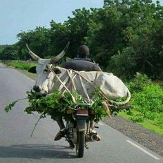 Africa Transporter