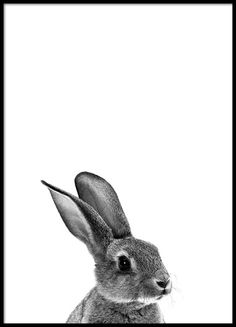 Grey bunny Poster
