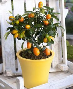 Planter Pots, Bonsai, Flowers, Gardening, Decoration, Design, Decor, Lawn And Garden, Dekoration