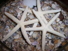 White Finger Starfish Sea Star fish loose for decorating, crafts, or beach weddings- ALL SIZES