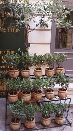 Garden Plant Stand, Metal Plant Stand, Garden Shop, Garden Art, Garden Design, Succulents Garden, Garden Plants, Topiary Garden, Topiaries