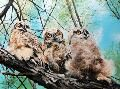 Christine Ford Banff Wildlife and Scenic Artist Owls, Wildlife, Ford, The Originals, Artist, Amigos, Artists, Owl, Tawny Owl