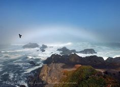 White Rainbow with Raven (fog rainbow beach birds sky water waves ). Photo by Feather3