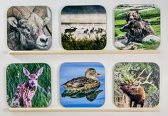 BEST SELLING ITEMS - Wooden Wildlife coasters, set of 6, Bar, wood, for dad, Groomsmen Gift, Wedding Party Gifts, drinkware, home accents, 1 by PicturesFromHeaven on Etsy